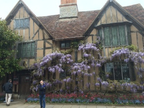 Wisteria covered house