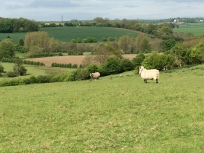 The battlefield is now a sheep pasture