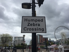 We never saw one humped zebra.