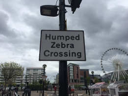 We never saw one humped zebra.