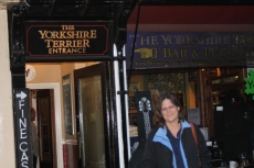 The Yorkshire Terrier (York)