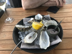 Oysters at MOS